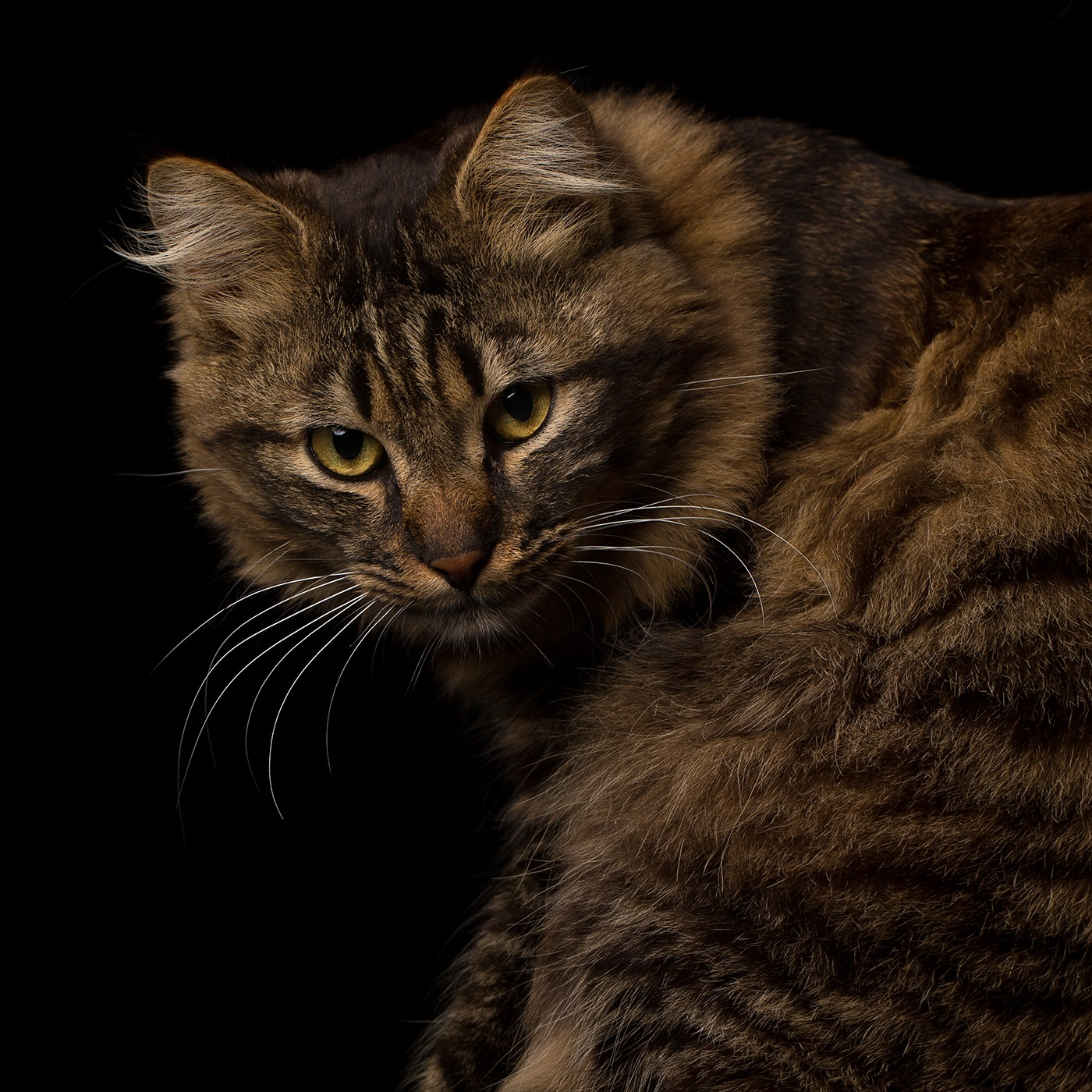 photographe-animaux-domestiques-chat-guillaume-heraud-06-small
