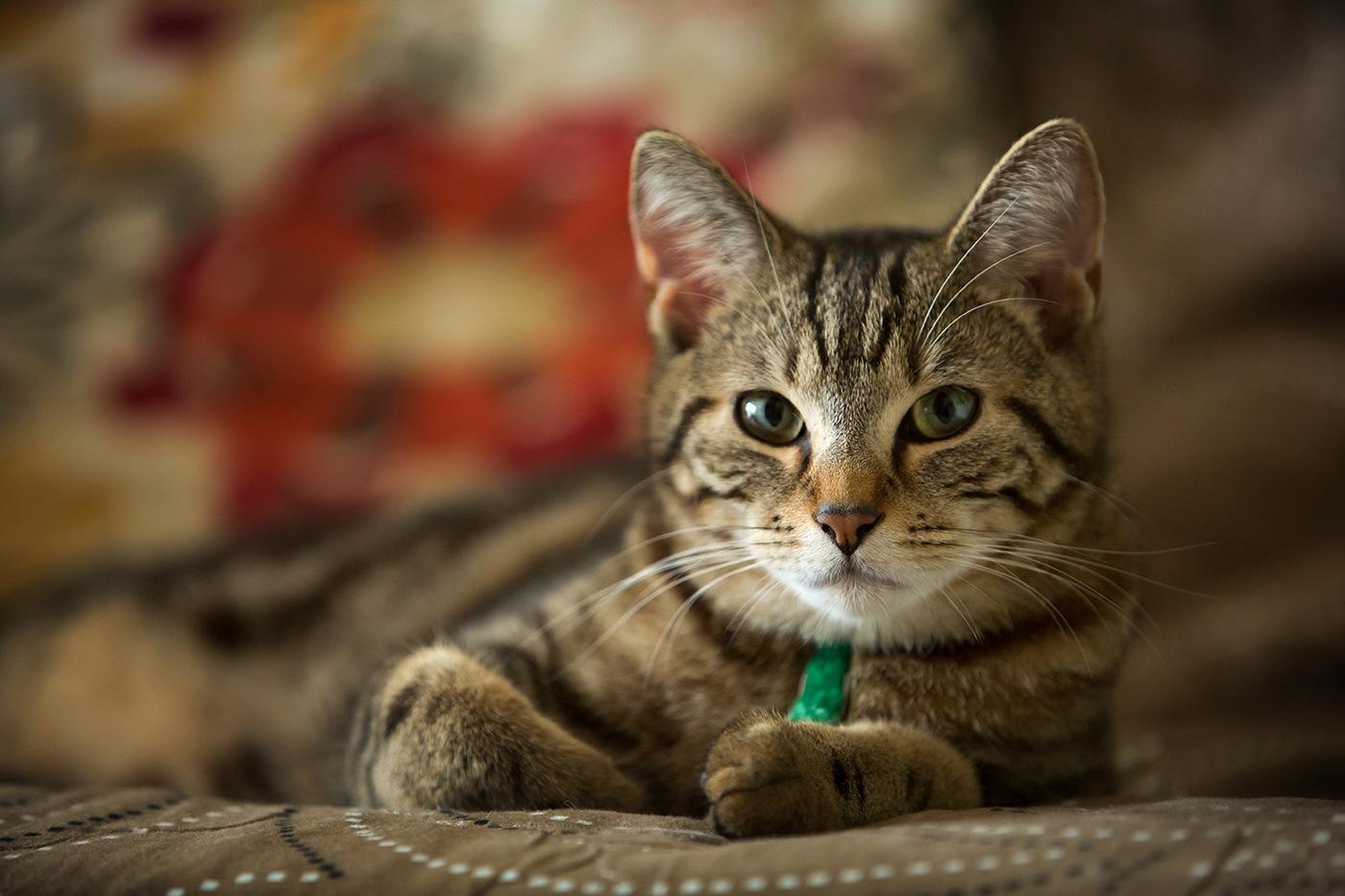 Chats Jaïne