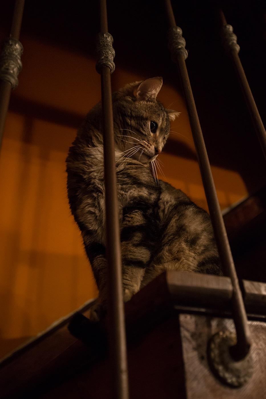 Simba escaliers