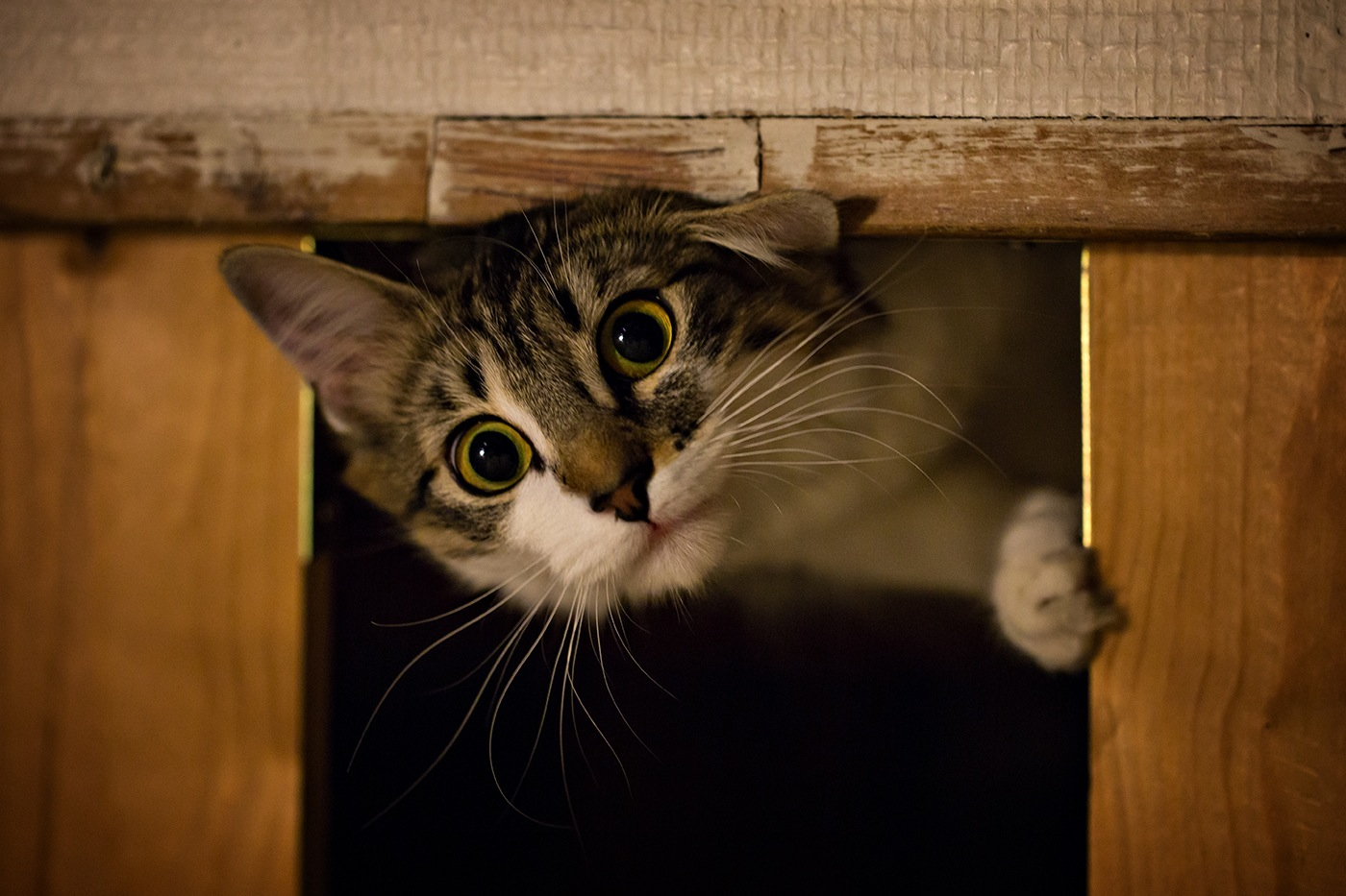 photographe-animaux-domestiques-chat-guillaume-heraud-12-small