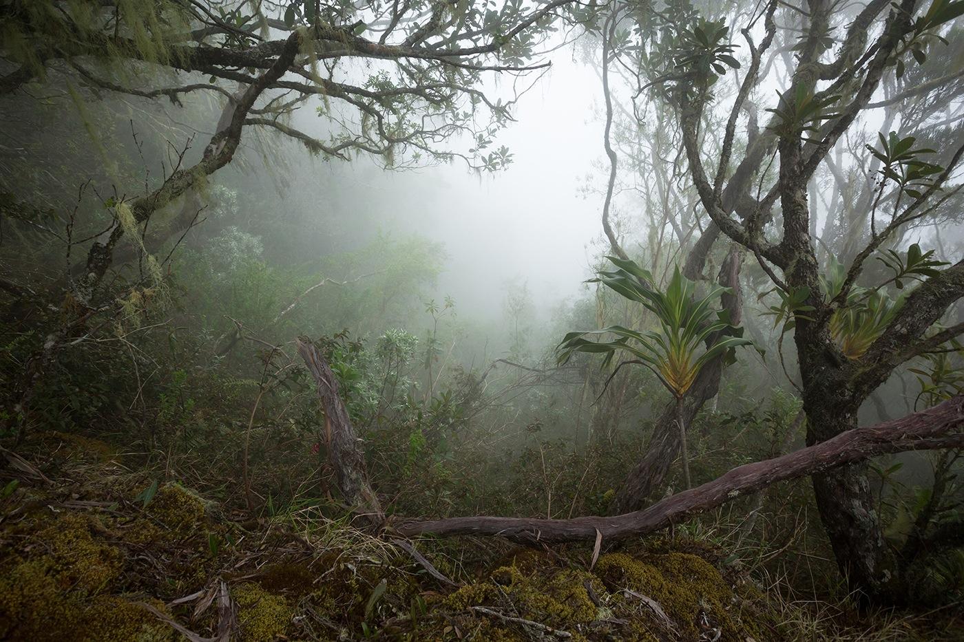 Le Bloc dans les brumes - Réunion