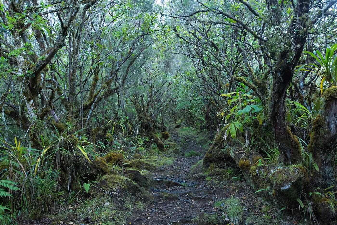 Forêt primaire / Cap des Anglais