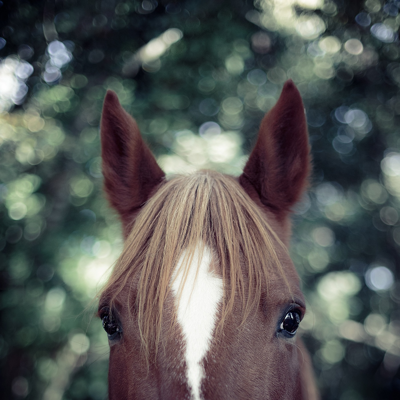 photographe-animaux-domestiques-chevaux-guillaume-heraud-02-small