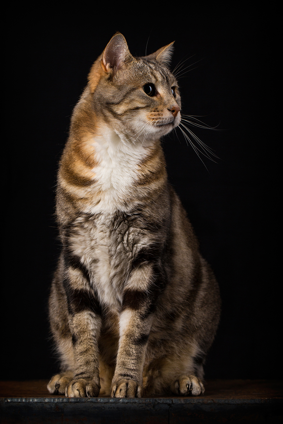 photographe-animaux-domestiques-chat-guillaume-heraud-18