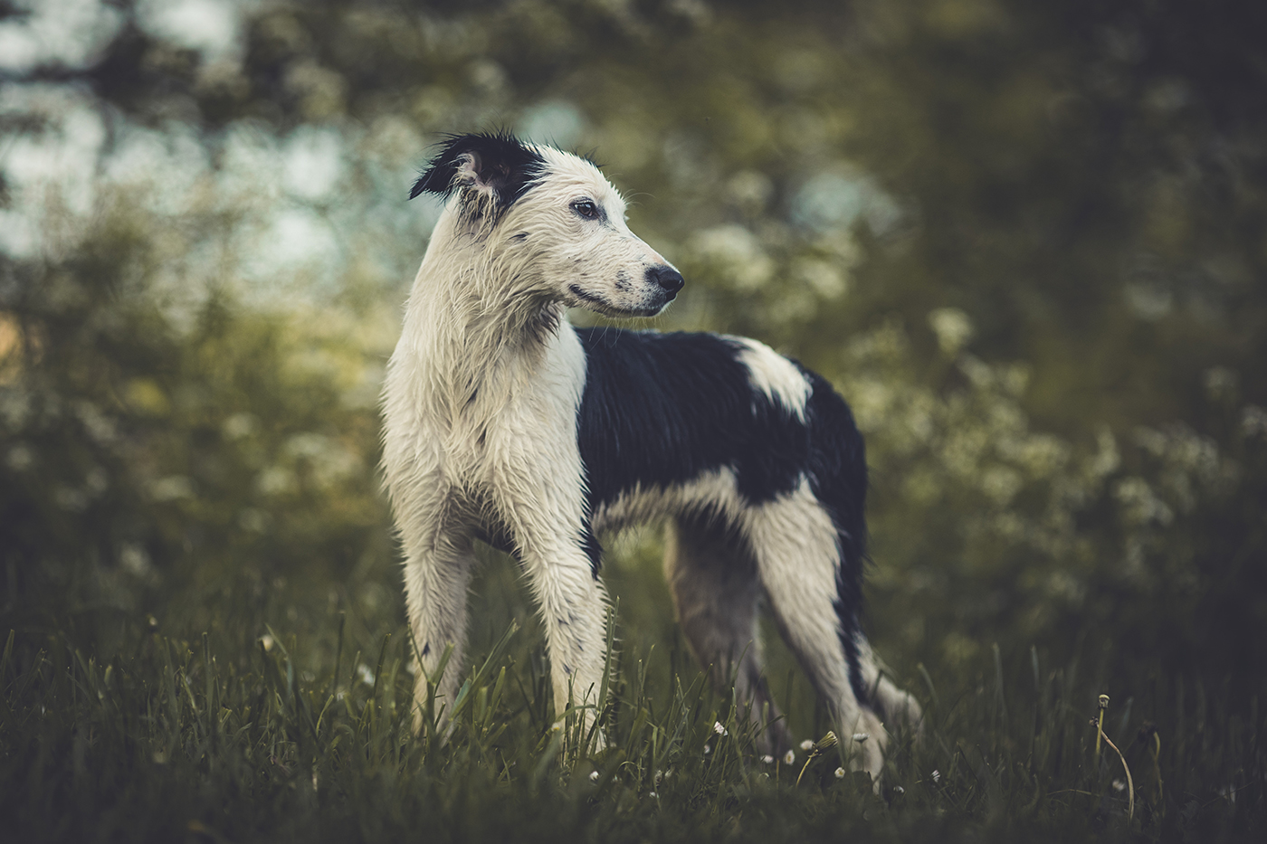 photographe-animaux-domestiques-chien-guillaume-heraud-02