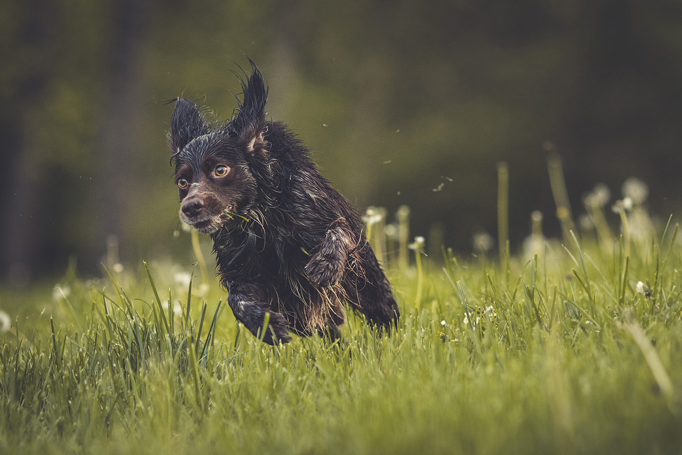 photographe-animaux-domestiques-chien-guillaume-heraud-03