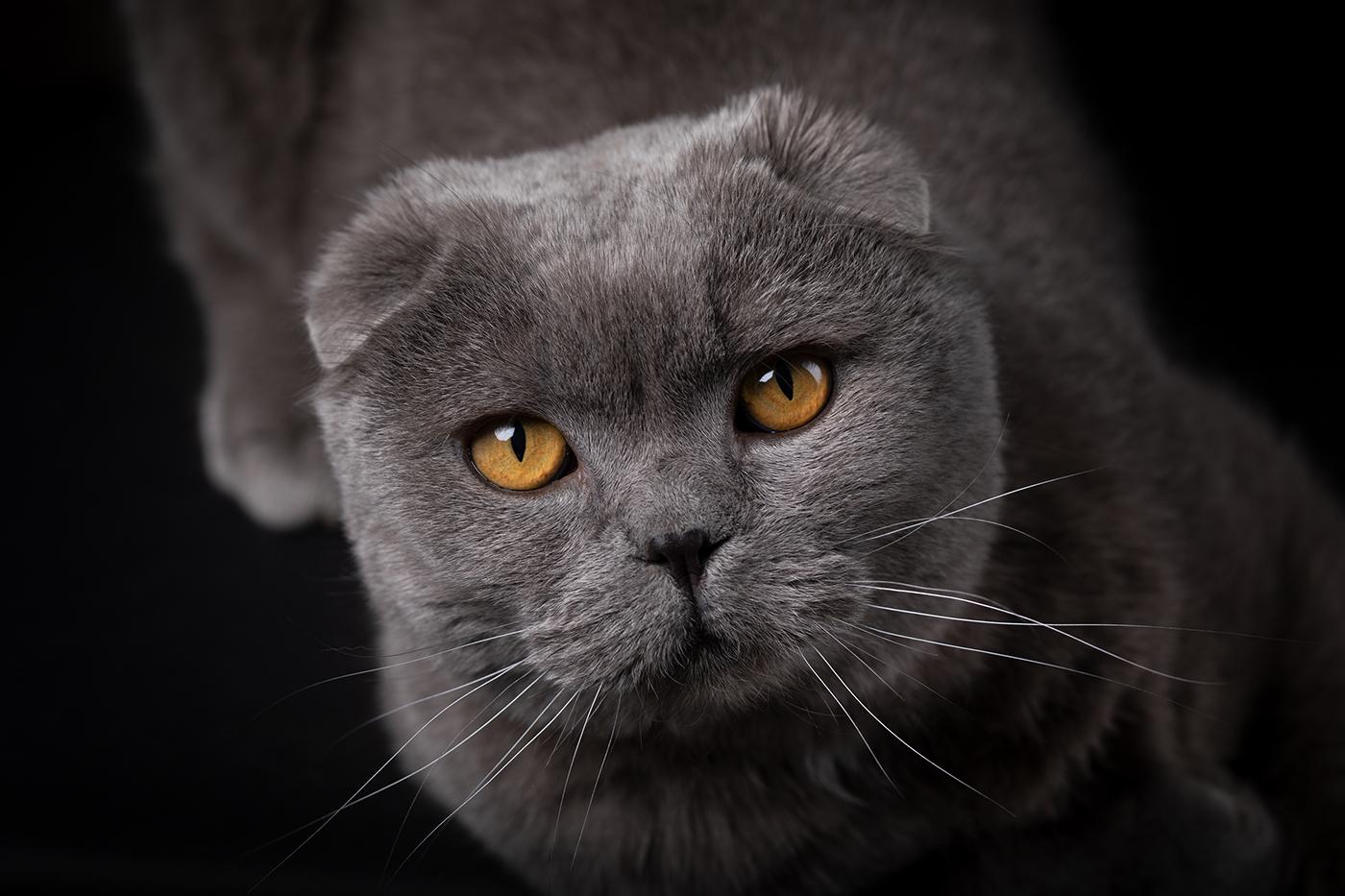 photographe-animalier-chat-poitiers-guillaume-heraud-02