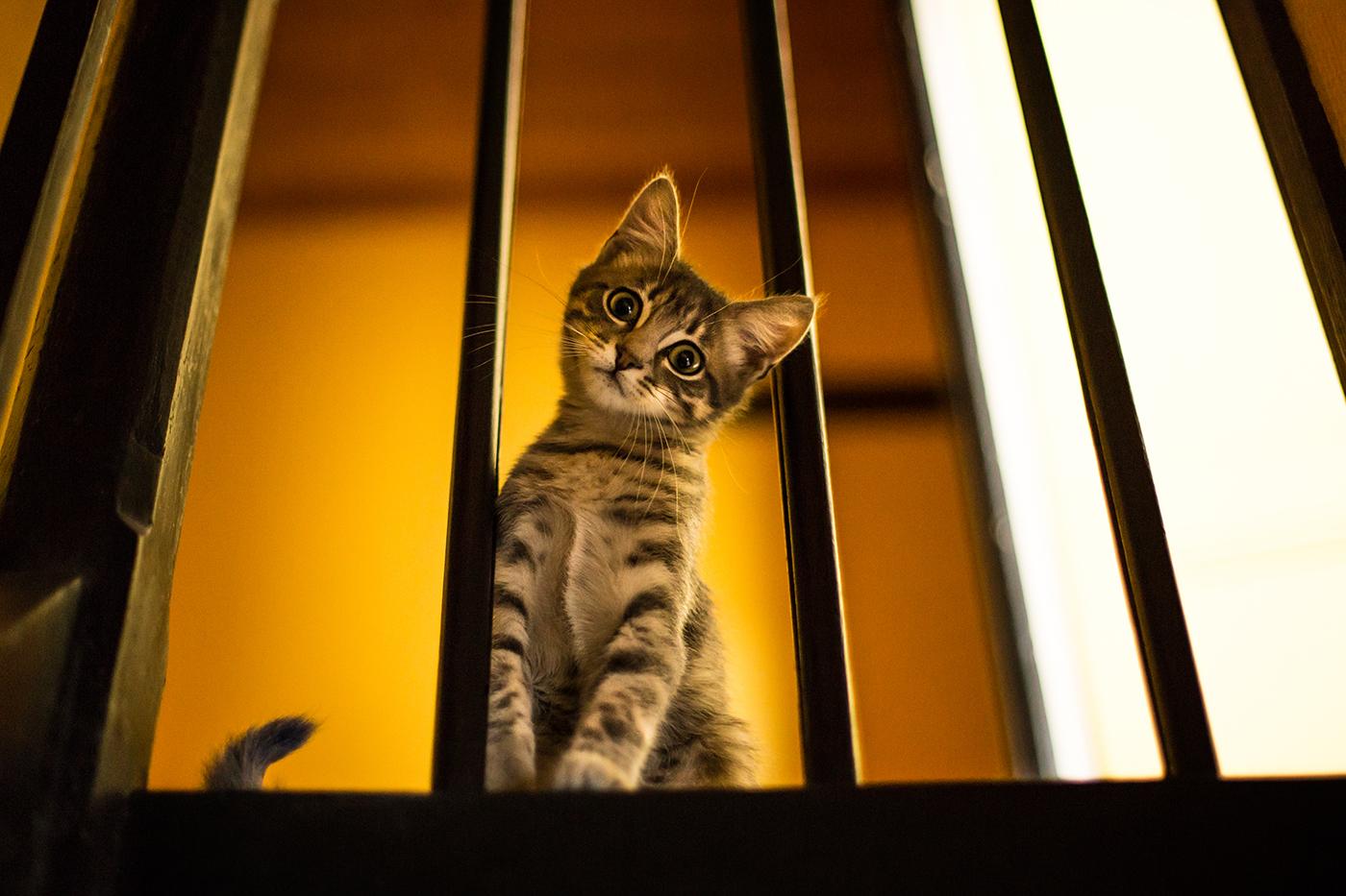 photographe-animalier-chat-poitiers-guillaume-heraud-04