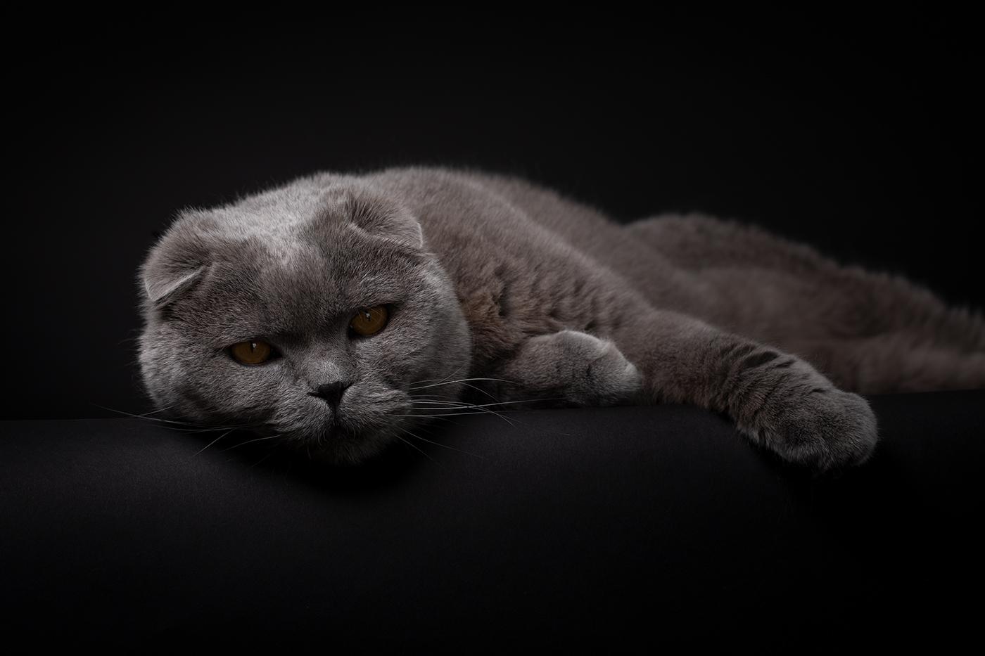photographe-animalier-chat-poitiers-guillaume-heraud-05