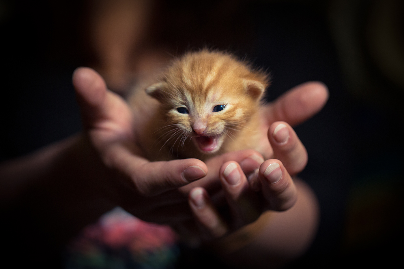 photographe-animalier-chat-poitiers-guillaume-heraud-18