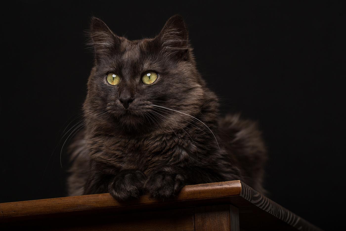 photographe-animalier-chat-poitiers-guillaume-heraud-20