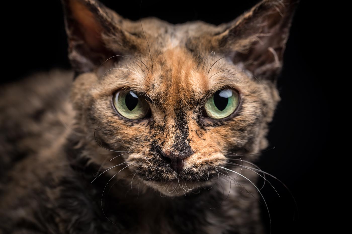 photographe-animalier-chat-poitiers-guillaume-heraud-21