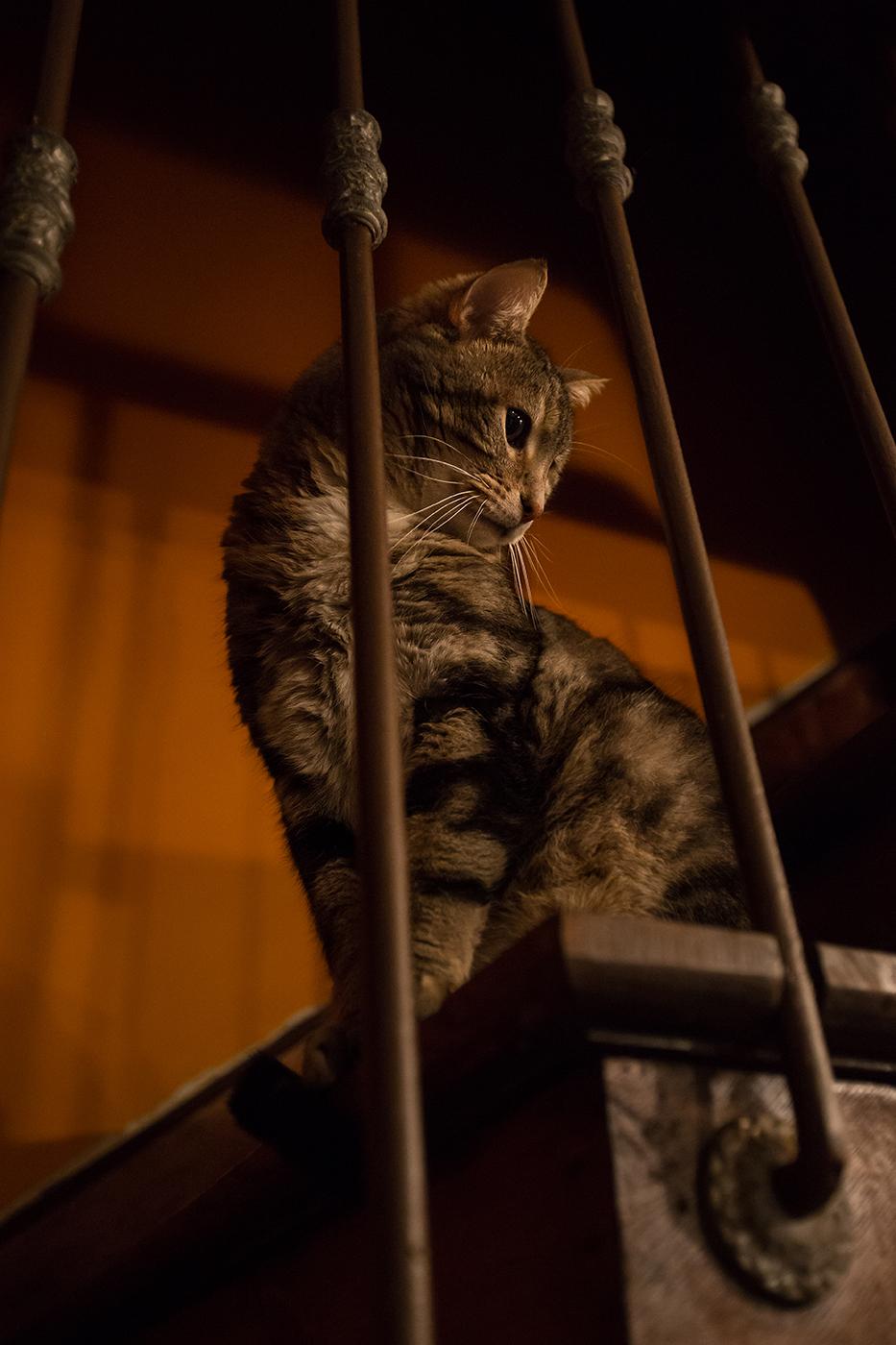 photographe-animalier-chat-poitiers-guillaume-heraud-23