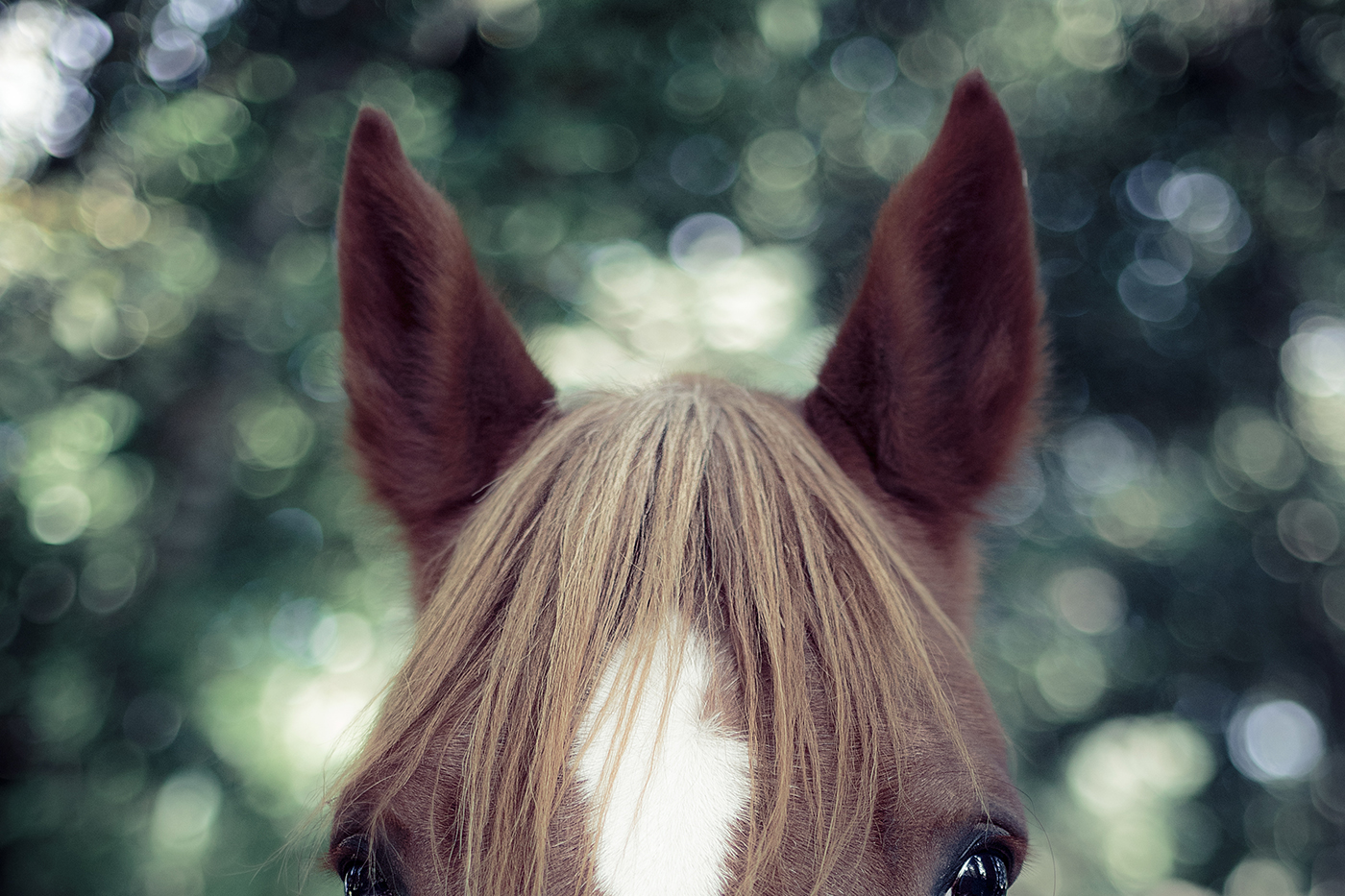 photographe-animalier-cheval-equestre-poitiers-guillaume-heraud-31