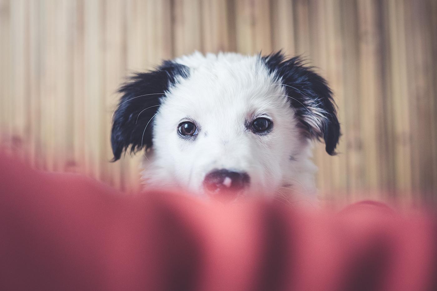photographe-animalier-chien-Canin-poitiers-guillaume-heraud-11