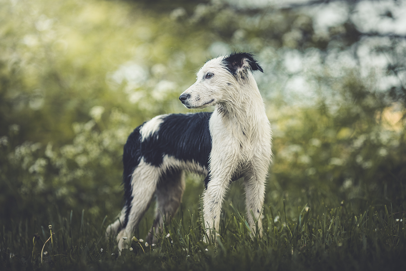photographe-animalier-chien-Canin-poitiers-guillaume-heraud-16