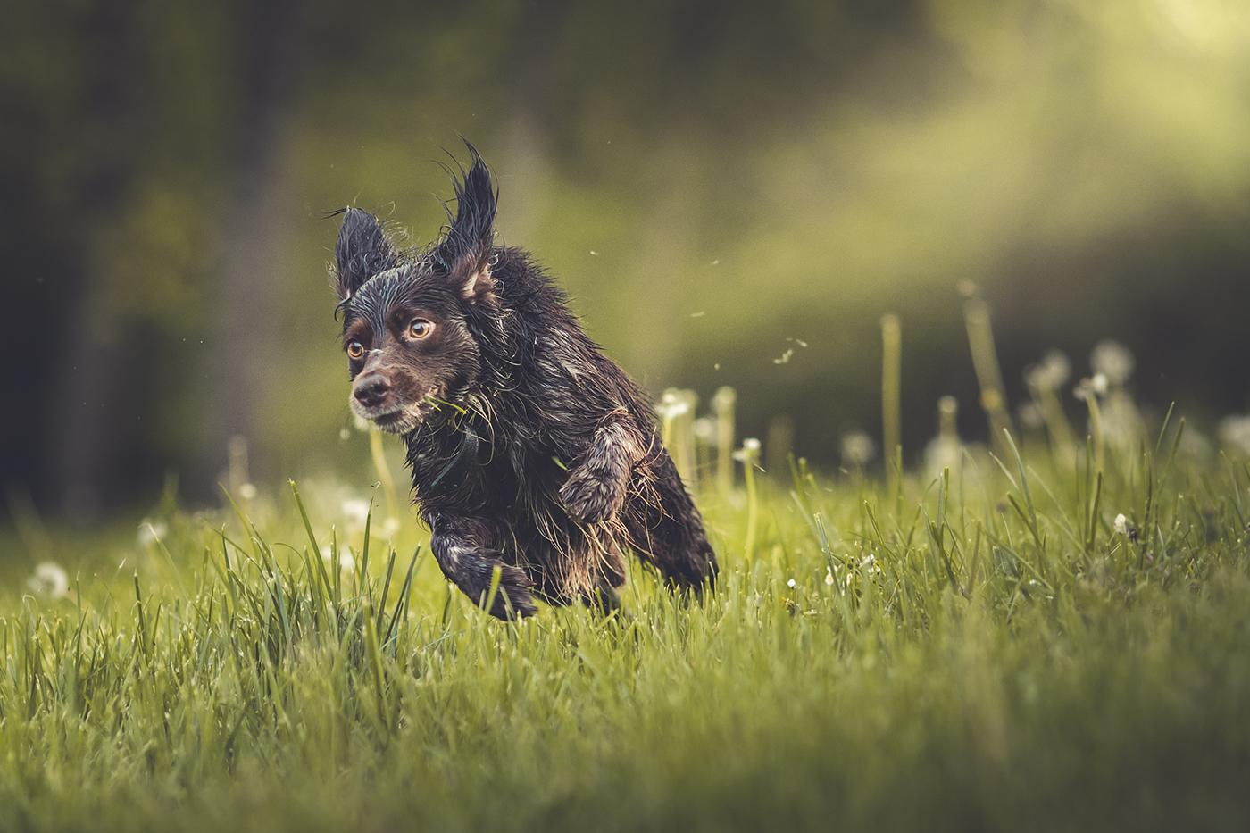 photographe-animalier-chien-canin-poitiers-guillaume-heraud-17