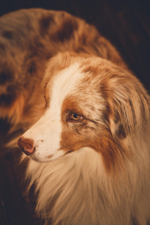 photographe-animalier-chien-canin-poitiers-guillaume-heraud-24