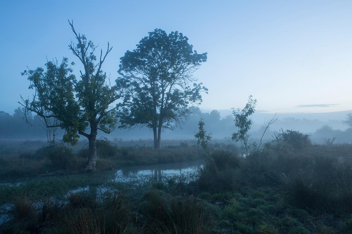 Marais Saint Agnant - fossé, arbres